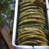 Coriander Butterflake Bread Recipe - #BreadBakers