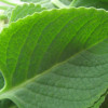 Peerkangai Thol Thuvaiyal (Ridge Gourd Skin Chutney)